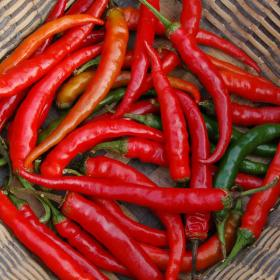 HOT CHILLI PEPPER- RING OF FIRE