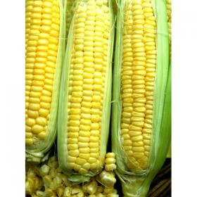 SWEET CORN- GOLDEN BANTAM