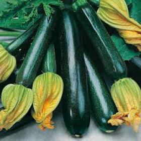 COURGETTE - BLACK BEAUTY