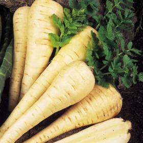 PARSNIP - TENDER AND TRUE
