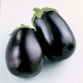 AUBERGINE- BLACK BEAUTY