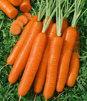 CARROT- ROYAL CHANTENAY