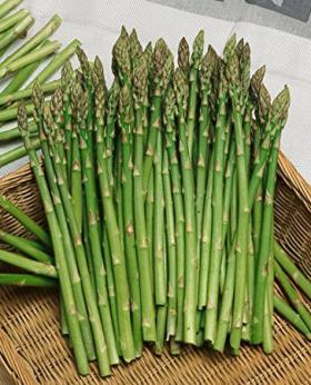 ASPARAGUS- MARY WASHINGTON
