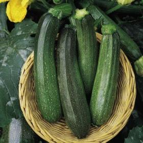 COURGETTE - GREEN BUSH F1 HYBRID