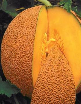 MELON -HONEYMELON