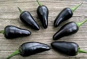 HOT CHILLI PEPPER - BLACK HUNGARIAN