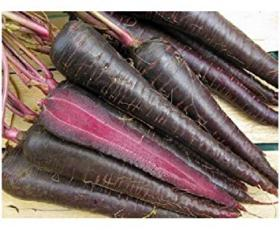 CARROT- DEEP PURPLE F1
