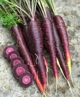 CARROT - PURPLE SUN F1