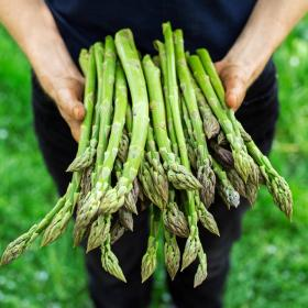 ASPARAGUS - CONNOVERS COLOSSAL