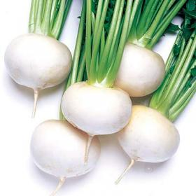 TURNIP WHITE BALL
