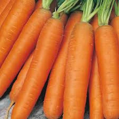 Packet - CARROT EARLY - EARLY NANTES 5 - organic seeds