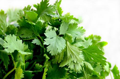 Packet - CORIANDER - organic seeds