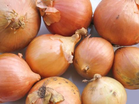 Packet - ONION - STURON - organic seeds