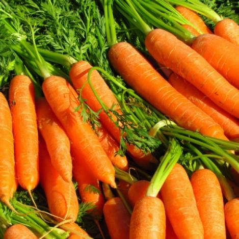 Packet - Carrot FLYAWAY - organic seeds