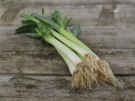 Packet - LEEK Gigante de Bulgaria - organic seeds