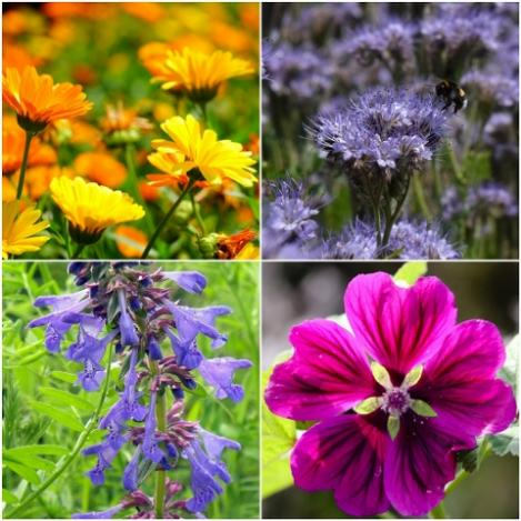 Packet - Wildflower mix - organic seeds